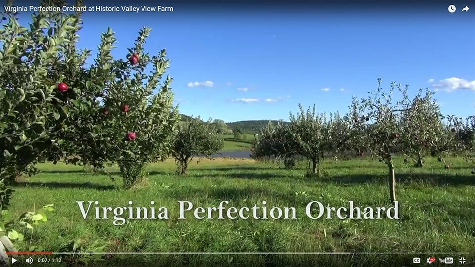 Virginia Perfection Orchard video
